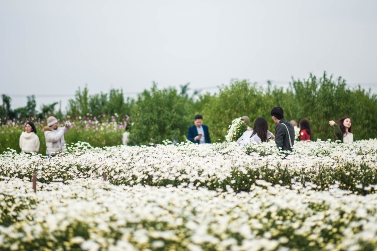 Từ thứ 6, nhiều người đã tranh thủ rục rịch chụp ảnh cùng hoa. Ảnh: Bảo Ngọc.