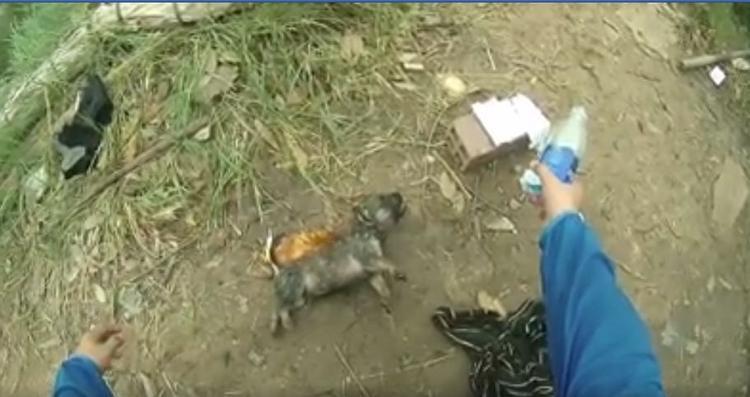 Anh Minh dùng vỏ chai nước suối loại nhỏ để cấp cứu chú chó nhỏ.