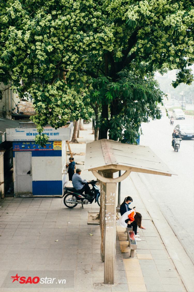 Đừng ngồi đợi xe buýt trên phố Nguyễn Chí Thanh nếu không muốn bị đau đầu.