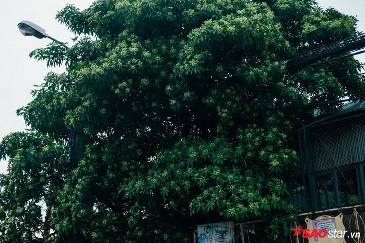 Góc đường Quang Trung.