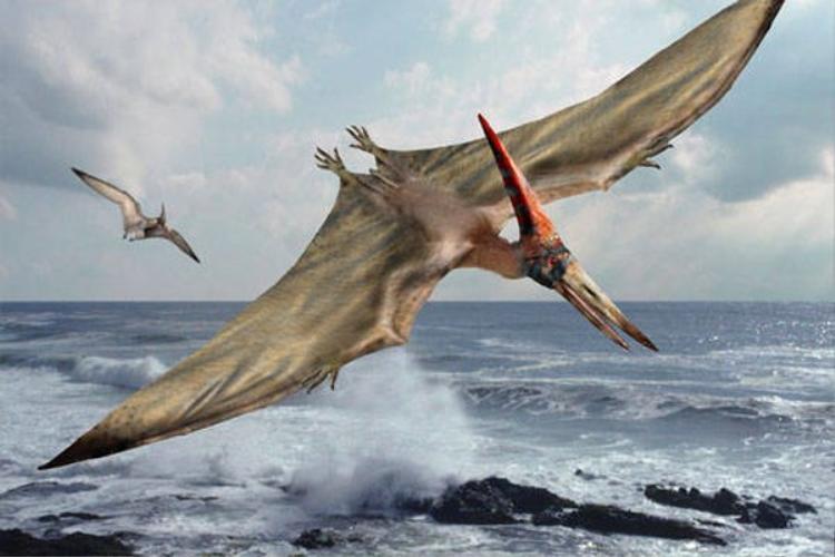 Thằn lằn bay pterosaur là loài bò sát biết bay, sống ở kỷ Tam điệp.