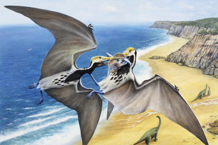 Trong lần phát hiện này, các nhà khoa học tìm thấy 215 quả trứng khủng long còn nguyên vẹn phôi.