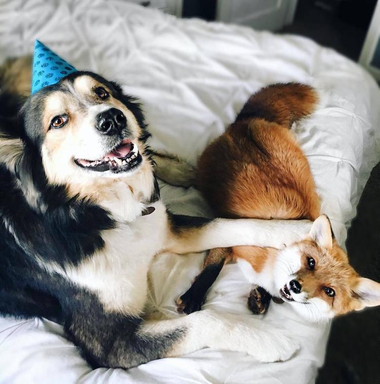 Chó, mèo đang thống trị Internet rồi, không tin bạn xem ngay 10 cún cưng này