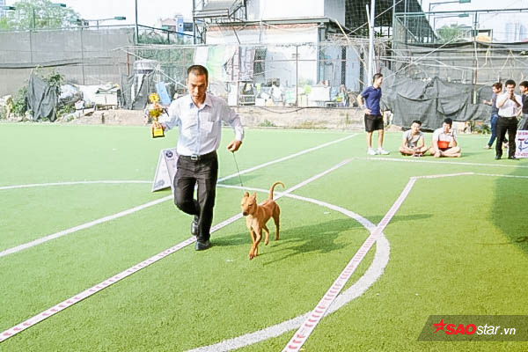 Cảnh một chú chó Phú Quốc của anh Thắng sau khi nhận được giải.