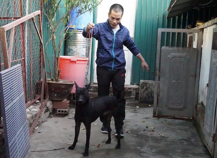 Con chó Phú Quốc này từng đạt được nhiều giải cao.