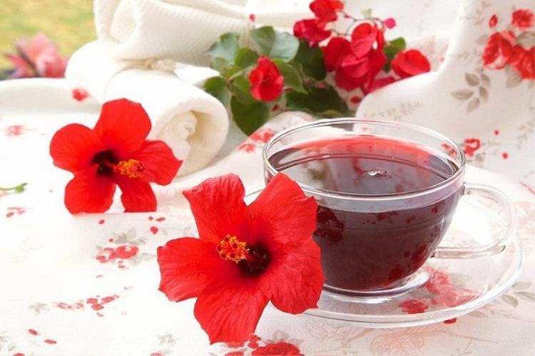 Loài hoa ở Việt Nam chỉ có con nít chơi đồ hàng được làm thành đồ uống nổi tiếng của Ai Cập