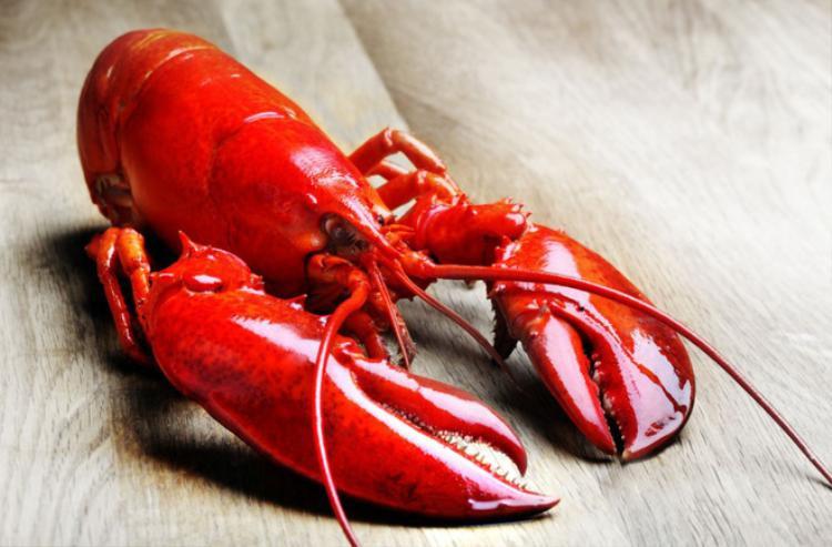 """Tôm hùm - thứ thực phẩm hảo hạng, nguyên liệu cực phẩm, linh hồn của nhiều bữa tiệc sang trọng hay """"nguồn sống"""" của những tín đồ yêu thích hải sản."""