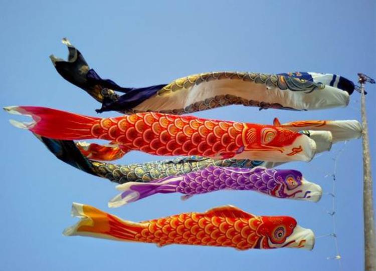 Những dải cờ cá chép tại Nhật Bản thường có các màu cơ bản là đỏ, xanh và đen…, được làm bằng vải hoặc giấy.
