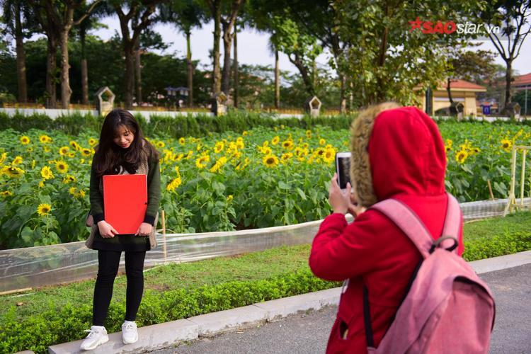 """Dù không đứng gần nhưng do cây hoa cao lớn, các bạn trẻ cũng đủ có những bức ảnh """"ảo tung chảo""""."""