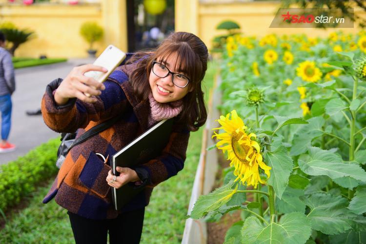 Không cần phải đến tận Nghệ An, người dân Hà Nội vẫn có thể ngắm hoa hướng dương nở rộ tại Hoàng thành Thăng Long