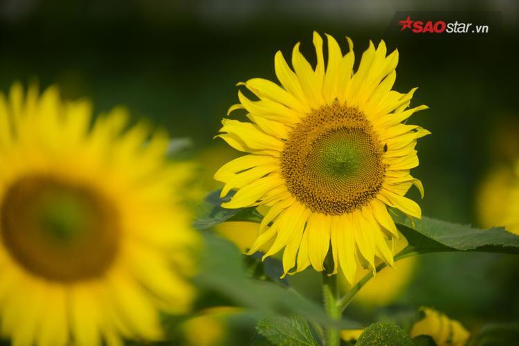 Thời tiết lạnh là lúc thích hợp cho việc cây hoa phát triển.