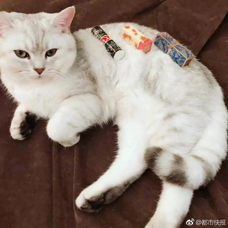 Tới với dịch vụ thuê mèo, bạn sẽ phải trả 10 USD cho 5 lần chụp.