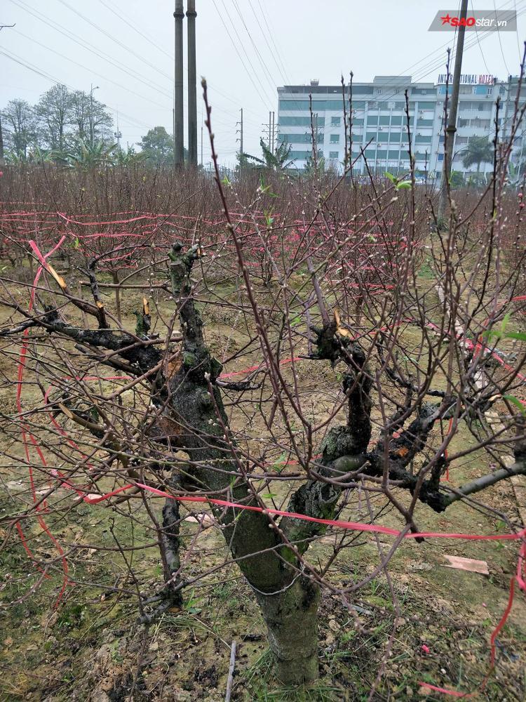 Có những cây thế đẹp có thể giúp nhà ông thu được 10 triệu đồng.