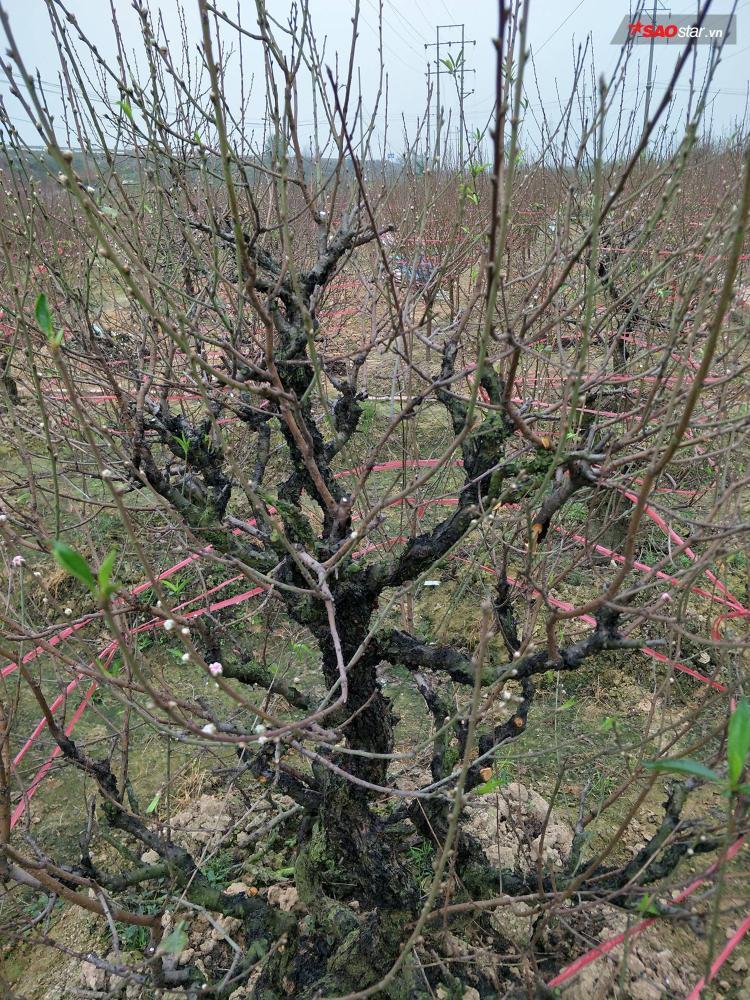 Bên cạnh đó, có nhiều cây trong số bị chặt phá khách đã đặt.