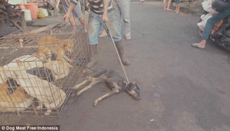 Một chú chó bị lôi ra khỏi chuồng và đánh tới chết.