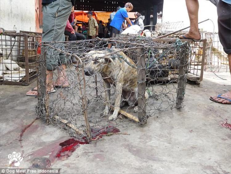 Chỉ có khoảng 7% dân số Indonesia ăn thịt chó, tuy nhiên theo báo cáo, con số này có thể còn tăng lên.