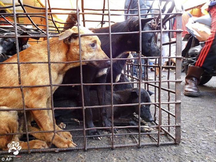 Ở một số khu vực, thịt chó được coi là một loại thực phẩm truyền thống và thường được người dân ăn trong các lễ hội lớn hay sự kiện trọng đại của gia đình như đám cưới.