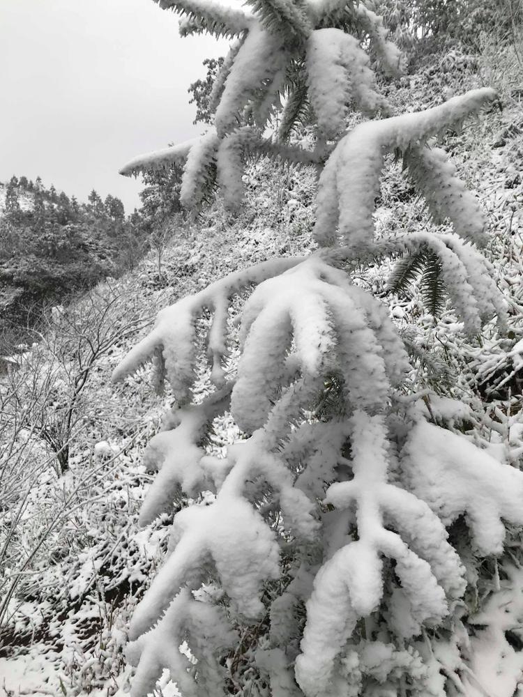 Khung cảnh tuyết phủ trắng xóa ở đèo Ô Quy Hồ .