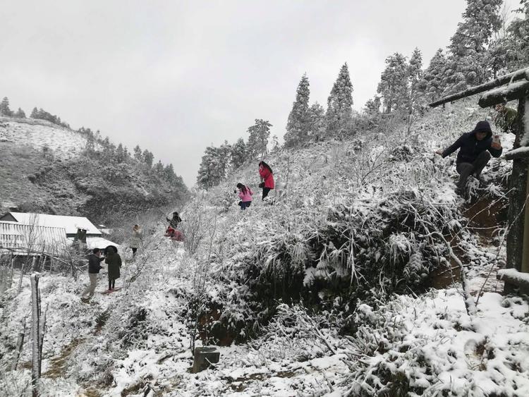 Ông Lưu Minh Hải, Giám đốc Trung tâm Dự báo Khí tượng Thủy văn Lào Cai xác nhận tuyết rơi từ 8h sáng 31/1 và đang bắt đầu dày và lan rộng xuống thị trấn Sa Pa.