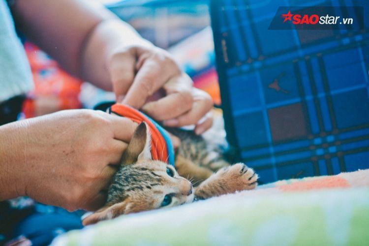 Cứ vậy, 14 năm nay, dì Mai rong ruổi khắp Sài Gòn chỉ để nuôi tụi mèo hoang thành phố.