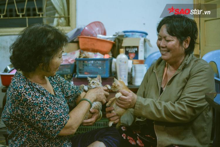 Dì Mai, cô Trinh… những bà lão không giàu có gì, đã có gần 20 năm cho những chú mèo hoang như thế.