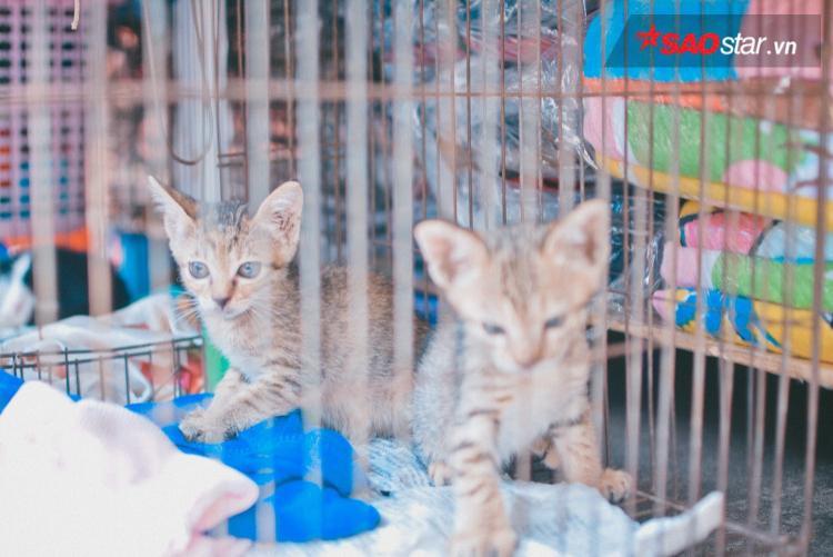 Chuyện những 'bà khùng' gần 20 năm cưu mang mèo hoang ở Sài Gòn