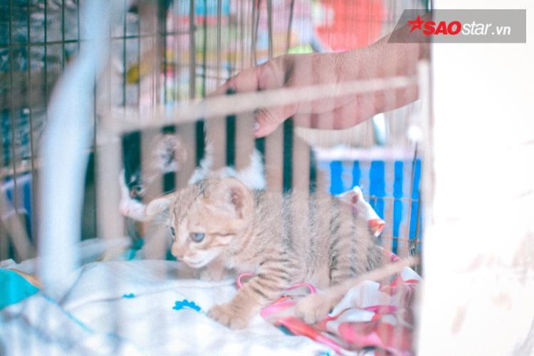 Con mèo hoang được nhận nuôi.