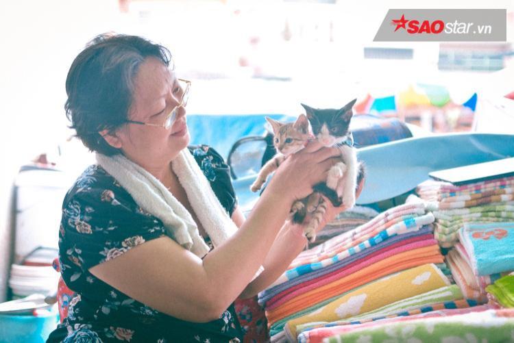 Dì Mai còn phải đi chăm tụi mèo con ở bệnh viện, trường học, nhà chùa…