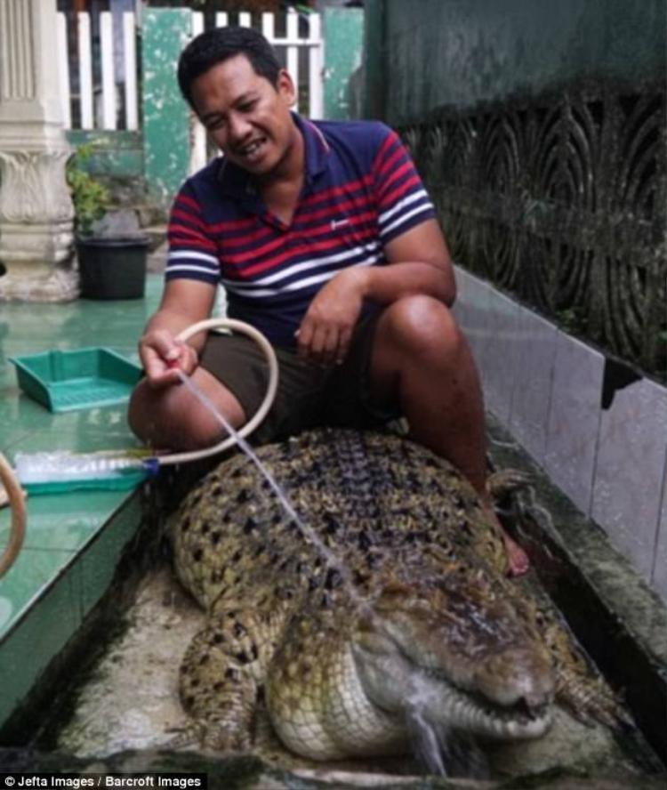 Chú cá sấu này thậm chí còn nhiều tuổi hơn con trai anhMuhammad Iwan.