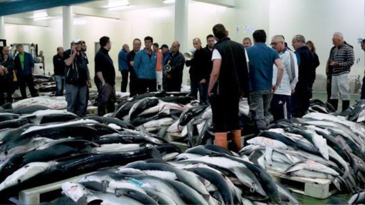 Một phiên đấu giá cá mập tại thị trấn Vigo. Ảnh: LHZB