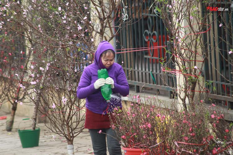 Nếu chưa thấy Tết, hãy tìm đến sắc đào ở chợ hoa Quảng Bá