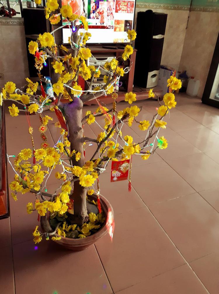 Chậu hoa mai hơn 100.000 đồng đẹp lung linh của Thanh Hoàng.