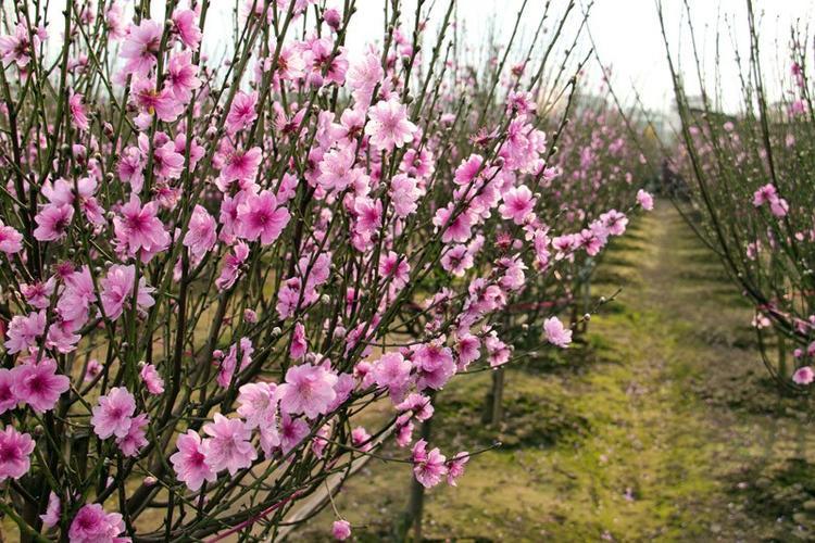 Do khối không khí lạnh suy yếu, thời tiết cả 3 miền đều nắng ấm trong 3 ngày đầu xuân năm mới.