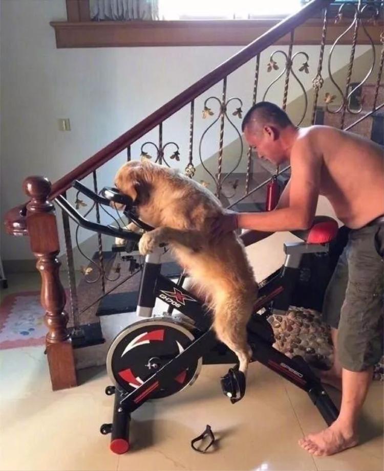"""Bố không say, bố chỉ dạy """"em vàng"""" nhà mình đạp xe tí thôi mà."""