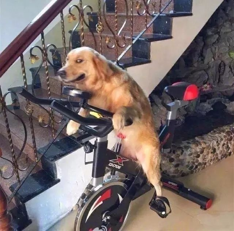 Nhìn gì mà nhìn, chưa thấy con chó nào đạp xe bao giờ à?