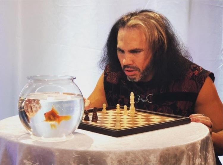 Đừng đùa, cá cũng có khả năng chơi cờ vua như con người.