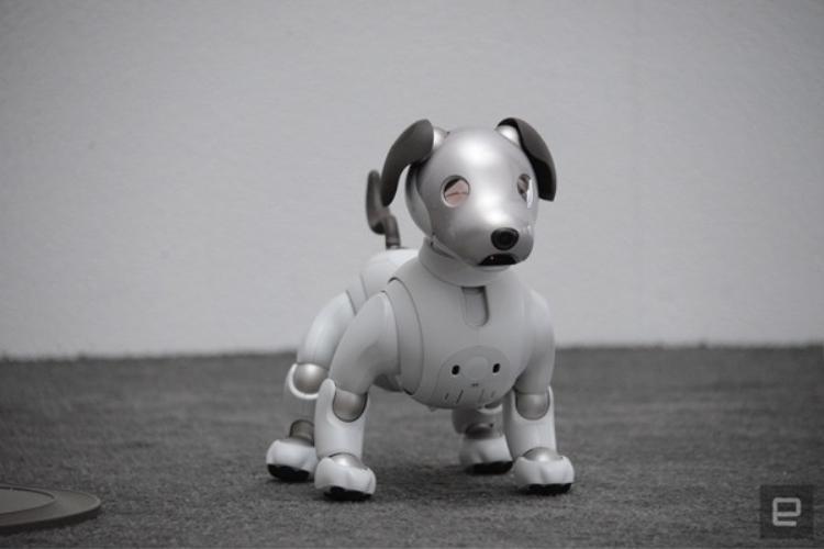 Năm mới Mậu Tuất, gặp chú chó robot dễ thương nhất hành tinh