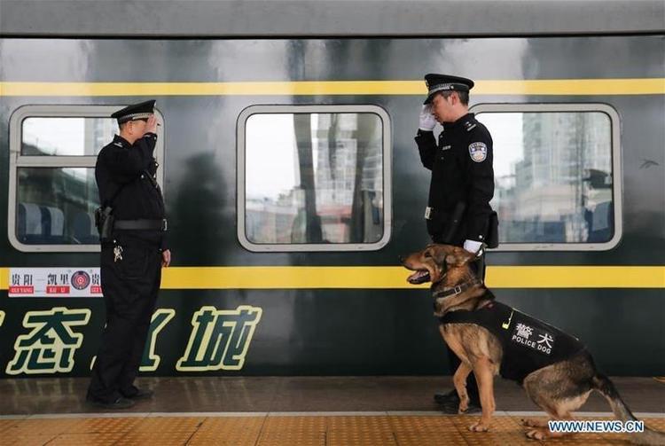 Tuy là một chú chó nhưng Long Ya luôn tuân thủ các nguyên tắc ngành nghề giống như con người.
