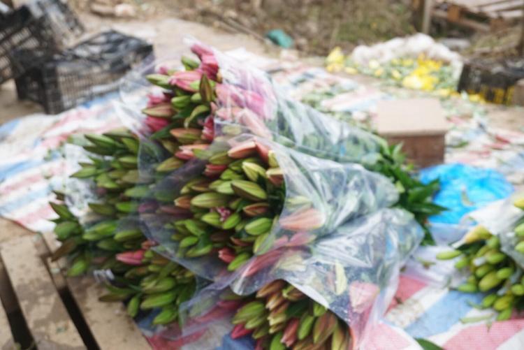 Từng bó hoa ly chuẩn bị mang ra chợ bán.