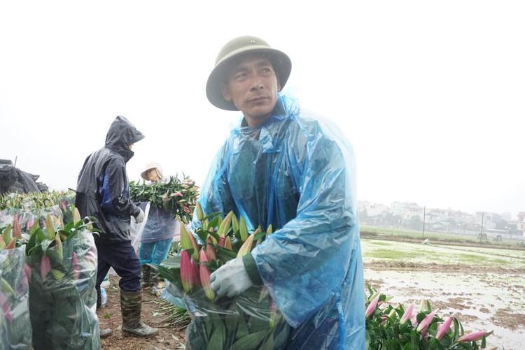Ông Lâm than thở khi mỗi bó 10 cành hoa ly đỏ giá cao chỉ 100 nghìn đồng.