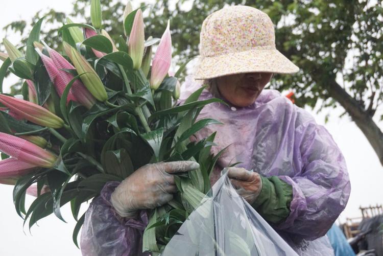 Bà Biên buồn rầu cho biết, năm nay thời tiết rét đậm rét hại lâu ngày nên hoa nở muộn.