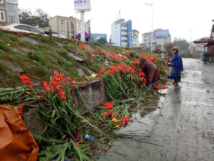 Nhìn những hình ảnh này khiến ai cũng xót xa. Theo người dân, để có hoa mang đi bán người dân phải chăm sóc trong suốt thời gian vài tháng trời. Thế nhưng thời điểm trong Tết hoa nở ít nên đành phải để qua Tết nhưng do thời tiết ấm nên hoa nở rất nhanh, không bán được nên đành vứt bỏ.