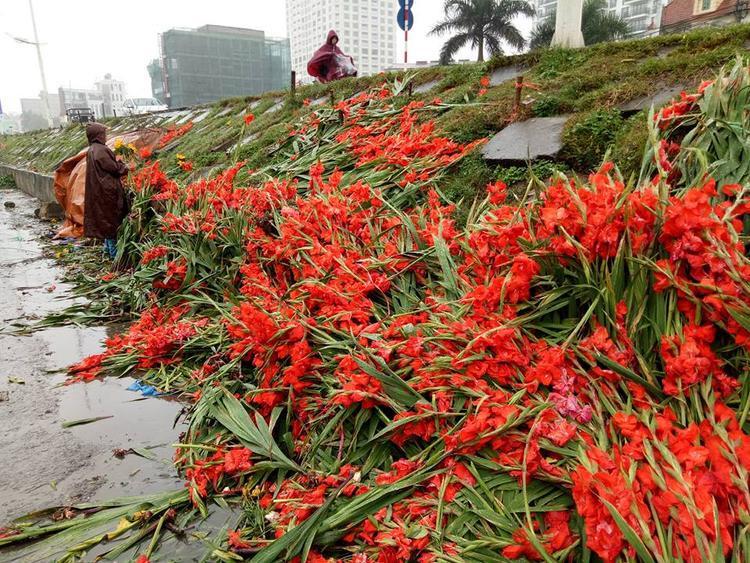 Hàng nghìn bó hoa tươi bị vứt bỏ ngay tại chợ vì giá rẻ mạt, người dân ra nhặt mang về cắm