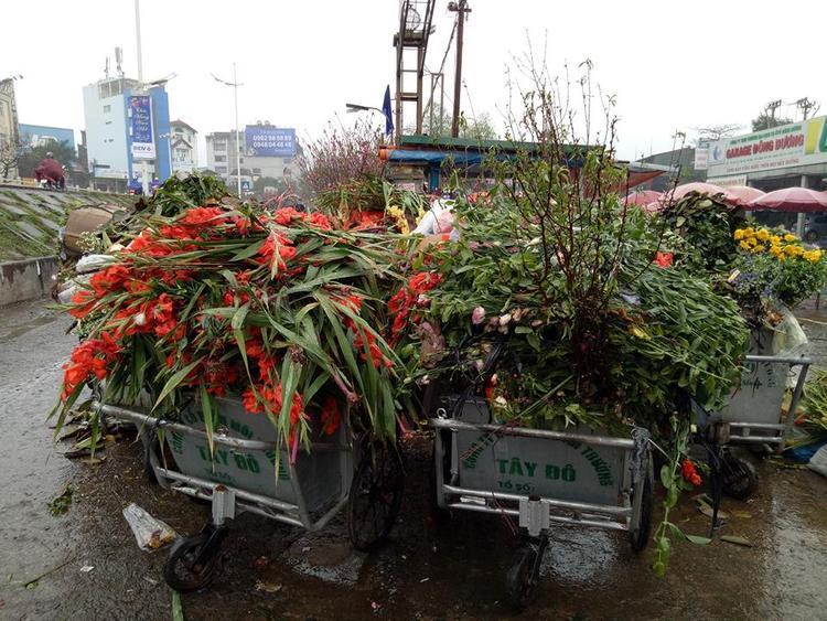 Hay thậm chí vứt bỏ ngay xe chở rác. Không chỉ có hoa lay ơn rớt giá, mà ngay cả hoa ly, năm nay cũng rớt thê thảm. Trung bình một bó ly gồm 10 cành chỉ có giá từ 50-80 nghìn đồng, rẻ bằng 1/10 so với thời điểm trước Tết.