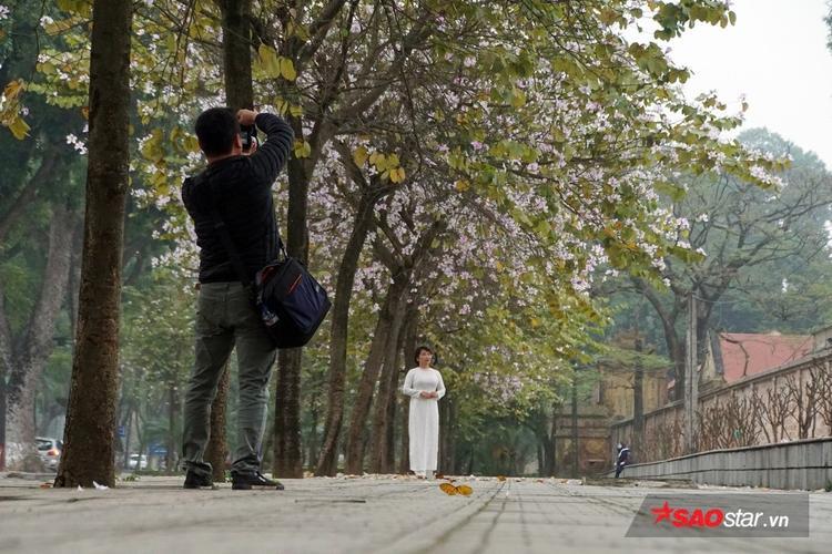 Chẳng cần đi đâu xa để ngắm hoa ban bung nở, một số tuyến phố ở Hà Nội mỗi độ xuân về cũng phủ kín sắc ban như mang cả mùa xuân Tây Bắc về giữa đất trời Thủ đô.