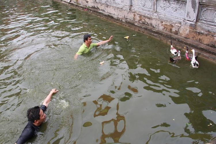 7 con vịt được thả xuống hồ nước trước cửa đình làng. Nhiệt độ dưới nước khá lạnh nhưng trai làng ai ai cũng phấn khởi tham gia.