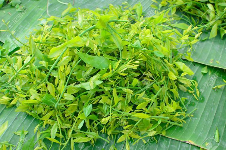 Những đọt rau sắng non tơ là món quà không thể bỏ qua khi đến chùa Hương trẩy hội dịp đầu xuân.