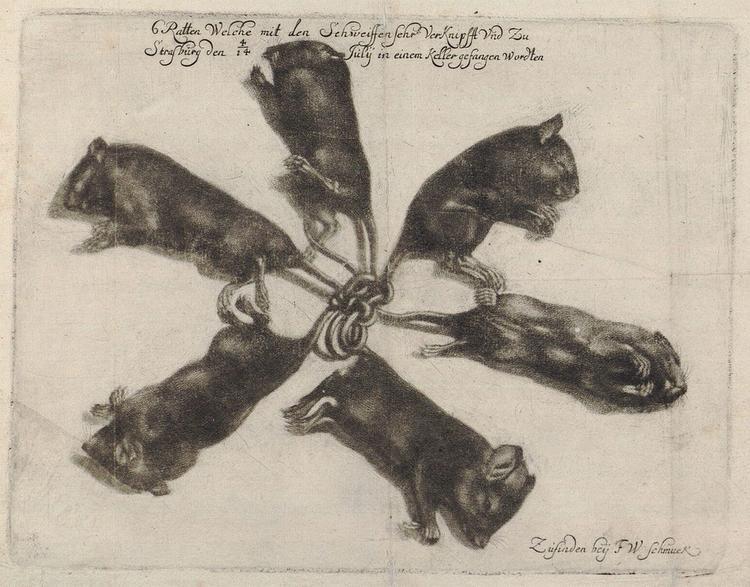 Ví dụ minh họa về hiện tượng kinh dị liên quan tới loài chuột năm 1683