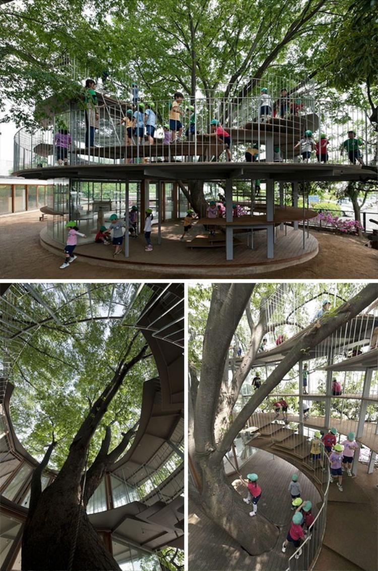Một trường học ở Nhật xây dựng hình xoắn ốc theo gốc cây to.