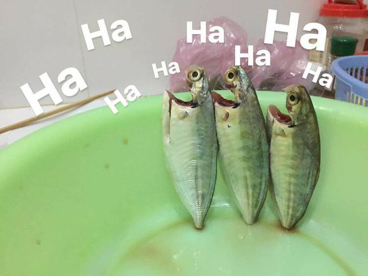 Những con cá này đang trở thành tâm điểm cư dân mạng